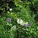 Am Schmalen Leist: Auch an den schmalsten Stellen noch voller Blumen
