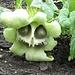 www.calflora.net/bloomingplants/wildcucumber.htm