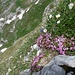 Auf dem Kreuzberg gibt es nicht nur Fels, sondern auch Gras und Blumen