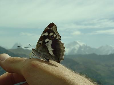 Eiger, Schmetterling und Jungfrau