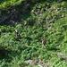 Sul sentiero in mezzacosta verso l'Alpe Cassengo