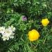 Blumenvielfalt unterwegs