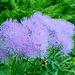hübsche, filigrane, Blüte im Wald