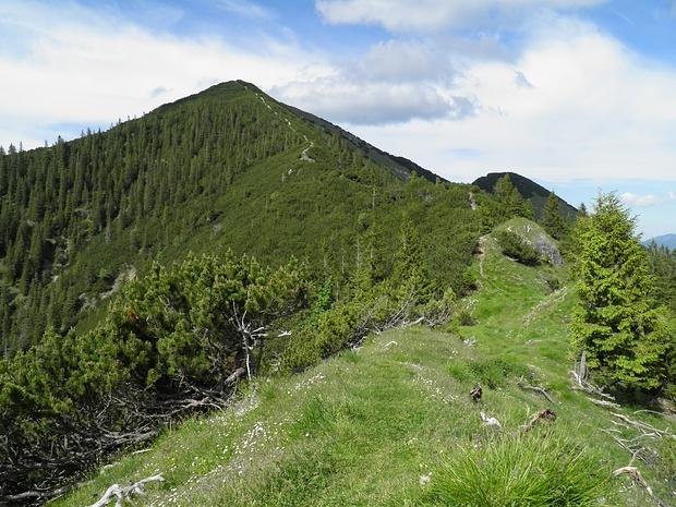 die breite Latschengasse am Südgrat der Notkarspitze ist gut zu erkennen