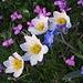 """Was für ein Geschenk! / Che bellissimo regalo!<br /><img alt=""""Happy Spring"""" height=""""158"""" src=""""http://www.sherv.net/cm/emo/happy/happy-spring-smiley-emoticon.gif"""" width=""""132"""" /> <img alt=""""Rainbow"""" height=""""93"""" src=""""http://www.sherv.net/cm/emo/happy/rainbow-smiley-emoticon.gif"""" width=""""106"""" /><br /><br />Wunderschön....jeder Tag, an dem man jetzt nicht in die Berge gehen kann, ist so richtig verschissen:-( / stupenda....ogni giorno che adesso non si può andare in montagna, è completamente sprecato!"""