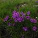 Amazing flowers in the Alp Flix area!