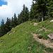Schöne Alpenblumen zwischen der Fähnerenspitz und dem Resspass