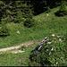 Entgegen allen Gerüchten vom toten Baum führt der Einstieg zur SW-Kante links vorbei am Steinmann direkt in den Wald.