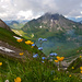Meine Lieblingsblumen vor dem wolkenumhangenen Allgäuer Wahrzeichen