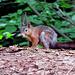 Ein hübsches Hörnchen...