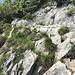 Vor dem Gipfel muss etwas gekraxelt werden. Alle schwierigen Stellen sind mit Ketten oder Stahlseilen gesichert.