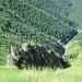 Il dirupato e selvaggio lato della La Piota che si affaccia in Val Pogallo.