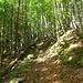 der Steig führt durch wunderschönen Wald ...