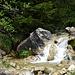 am hier munter sprudelnden Ruisseau des Plénets entlang ...