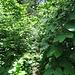 Zurzeit ist der Weg, der bei der Bernegg abzweigt, an manchen Stellen zugewachsen.
