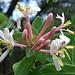 Hübsche Blüten im Dschungel