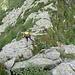 sulla cresta tra il Pizzo Verde e il Moriscioi