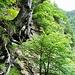 Bosco dell Erbi. Auf der Suche nach dem alten Weg zur Alp Tramossa.<br />Ein Blick über steilen Abgründen ins Val Marcia.