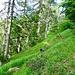 Der Weg von Corte Vecchio durch den Wald zur Alpe di Pii - 1607 Meter.