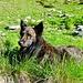 Artus geniesst die morgendlichen Sonnenstrahlen auf der Alpe Canaa.