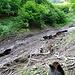 Ab ca. 1220 Meter geht das Disaster los. Hier kommen von der Alpe d' Arbèia und Fiümigna zwei kleine Tälchen herunter. Eine Lawine hat den Weg Weg auf einer Länge von ca. 200 Meter zur Unkenntlichkeit zerstört. Hier im Bild die erste Schneisse der Verwüstung. Jenseits der Kuppe mit dem Wäldchen siehts nicht besser aus.<br /><br />Der Weg ist zur Zeit gesperrt (Stand Juni 2018). Mit gutem Grund! Die Überquerung der beiden Lawinen ist heikel. Ich habe schon einige kleinere solche Querungen gemacht. Aber die hier ist von gröberem Ausmass.