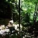 Im Abstieg durch den Wald von Piandalevi nach Someo.