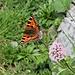 Viele Schmetterlinge waren unterwegs.