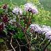 Der Speer bietet eine wunderbare Pflanzenwelt.