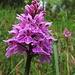 Müsste ein Orchideen-Gewächs sein.