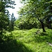 freundlich grüne Umgebung