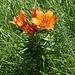 Schöne Blume, aber was für eine?