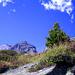 Schweizer Alpenvegetation – dahinter warten drei felsige Gesellen auf uns