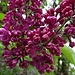 schmucke Blüten 1