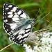 Unzählige Schmetterlinge waren heute unterwegs.
