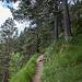 Abstiegsweg Dalfazalm-Maurach