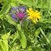 Haupzach, ma Blumen fotografiert!