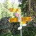 <b>Una volta raggiunto la Val Valleggia, mi immetto sulla sterrata già percorsa quattro giorni fa con il rampichino. </b>