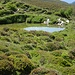 Auf den unendlich weiten Alpen zwischen Dreibündenstein und Windegga hat es zahlreiche Moortümpel Alpenrosen und Heidelbeerstauden auf unzähligen Hügelchen
