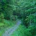Leuchtendes Grün im Laubwald