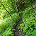 Waldpassage kurz vor Erreichen der Teerstrasse. Hier war es zum Teil recht glitschig.