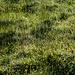 Zahlreiche Wassertröpfchen zieren die Gräser. Wunderschön, aber für die heutige Tour eigentlich eher nicht erwünscht...