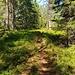 Der Weg führt weiter und weiter in den Wald