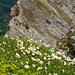 Blumen am Gipfel