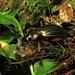 Am Radldepot schleppt ein grüner Laufkäfer eine Harzkugel davon / al deposito bici un coleottero verde trascina via una palla di resina