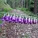 Fingerhut-Girlande. Roten Fingerhut gab es zahlreich. Das war aber nur der Beginn des heutigen Blumenreigens