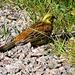 hier müssen unsere Ornithologen ran.....