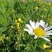 Blumen in allen Variationen