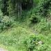 Leider verpasste ich nach dem Hüttenwasen den Einstieg in diesen Pfad und kam so über den Forstweg hierher. Der Pfad gehört nicht zum offiziellen Wegenetz. Oben am Baum sieht man aber einen Pfeil