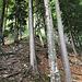 6 Baum rechts wieder Markiert