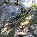9 Hier hoch, meinte erster abgeschnittener Ast oben in der Mitte, kleiner Busch